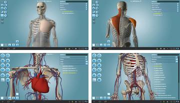 Anatomía 3D Pro
